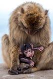 Affe mit Baby auf dem Gibraltar-Felsen Stockfotos