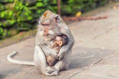 Affe mit Baby im Park Lizenzfreie Stockfotografie