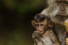 Affe mit Babynahaufnahme Stockfotos