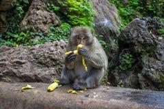 Affe mit Banane Stockfotos