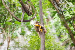 Affe mit Banane Stockfoto