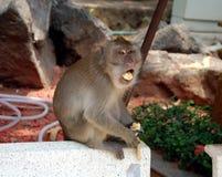 Affe mit Banane Stockbild