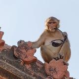 Affe mit Brillen auf Dach des Tempels Stockfoto