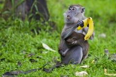 Affe mit dem Baby, das Bananen isst Lizenzfreie Stockbilder