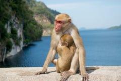 Affe mit dem Baby sitdown auf Beton Lizenzfreies Stockfoto