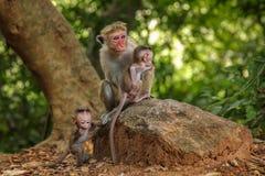Affe mit den Jungen Lizenzfreie Stockfotografie