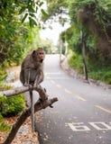 Affe mit einem Überraschungsgesichtsausdruck Lizenzfreies Stockfoto