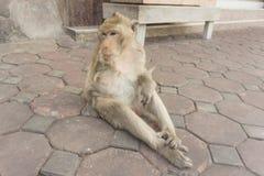 Affe mit einem Arm Thailand Lizenzfreies Stockbild