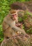 Affe mit einem Baby, das Fotografen schaut Lizenzfreie Stockbilder