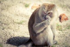 Affe mit einem durchdachten Blick Lizenzfreie Stockfotografie