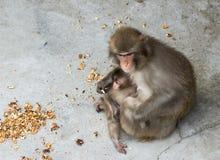 Affe mit einem Jungen Stockfoto