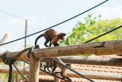Affe mit einem Lächeln mit Pfeffer Lizenzfreie Stockfotos