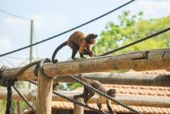 Affe mit einem Lächeln mit Pfeffer Stockfoto