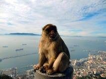 Affe mit einem Panoramablick von Gibraltar Lizenzfreie Stockfotografie