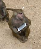 Affe mit einem Smartphone Lizenzfreie Stockfotos