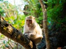 Affe mit einem Stern lizenzfreie stockfotografie