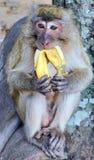 Affe mit einer Banane Stockfotografie