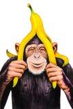 Affe mit einer Bananenschale Stockbild