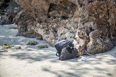 Affe mit einer gestohlenen Tasche von den Touristen Lizenzfreie Stockfotografie