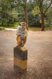 Affe mit einer Haut der Orange Lizenzfreie Stockbilder