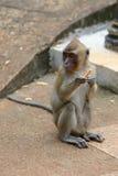 Affe mit einer Zigarette Stockbild