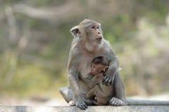 Affe mit Familie Lizenzfreies Stockbild