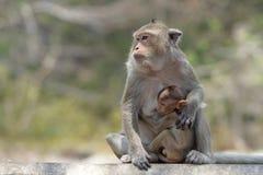 Affe mit Familie Lizenzfreie Stockfotografie