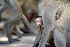 Affe mit Familie Stockfotos