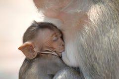 Affe mit Familie Lizenzfreies Stockfoto