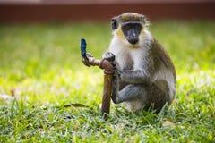 Affe mit Fuß auf Wasserhahn Stockfotos