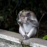 Affe mit Gläsern Lizenzfreies Stockfoto