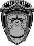 Affe mit Helm stockfoto