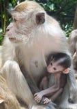 Affe mit ihrem kleinen Stockbilder