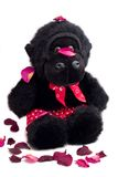 Affe mit Inner-Druck-Boxern Stockfotografie