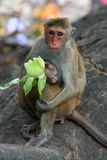 Affe mit Jungem Lizenzfreie Stockbilder