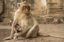 Affe mit Jungen Stockfoto