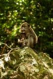 Affe mit Jungen auf einem Felsen Lizenzfreie Stockfotos