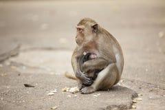 Affe mit kleinem Affen Lizenzfreie Stockbilder
