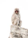 Affe mit klugen traurigen Augen Lizenzfreie Stockfotos