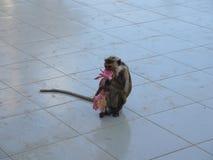 Affe mit Lotos Lizenzfreie Stockfotos