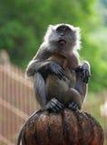 Affe mit neugeborenem Lizenzfreie Stockbilder