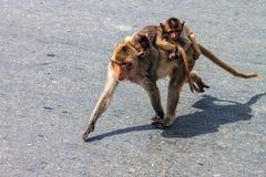 Affe mit seinen Babys Lizenzfreie Stockfotos