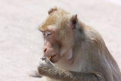 Affe mit seinen eigenen Tätigkeiten Stockbild