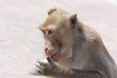 Affe mit seinen eigenen Tätigkeiten Lizenzfreies Stockbild