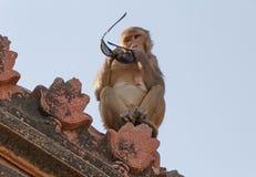 Affe mit Sonnenbrille auf Dach des Tempels Lizenzfreie Stockfotos