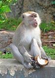 Affe mit Stück der Kokosnuss Stockfotos