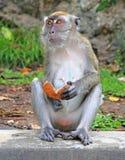 Affe mit Stück der Kokosnuss Lizenzfreie Stockfotos