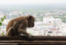 Affe mit Stadtansicht Lizenzfreies Stockfoto