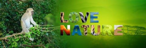 Affe mit Text Liebes-Natur Lizenzfreies Stockfoto