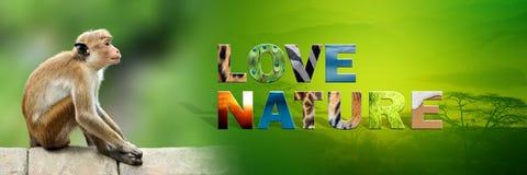 Affe mit Text Liebes-Natur Lizenzfreie Stockfotos